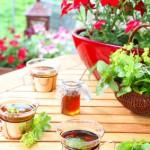 Gartenzeit, Kräuterernte, Kräutertee