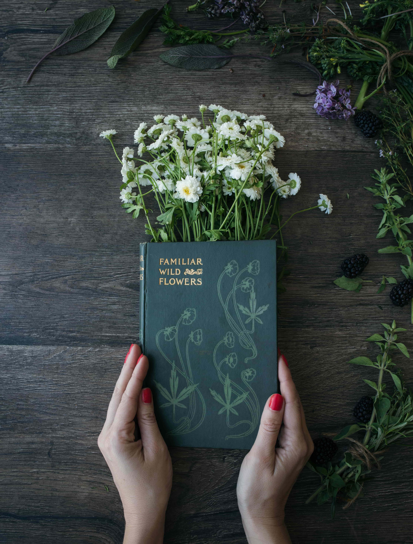 Un livre sur les plantes qui guérissent
