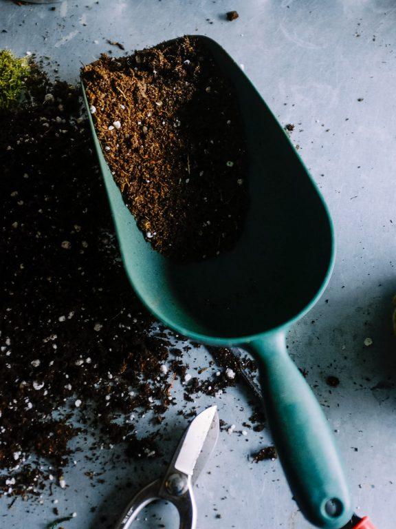Seniors — quelles plantes faire pousser en jardinière?