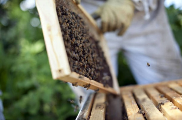 ruche-abeille-miel